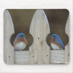 Eastern Bluebirds Mouse Mat