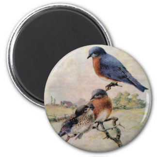 Eastern Bluebirds with Baby Bird 2 Inch Round Magnet