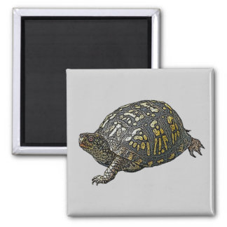 Eastern Box Turtle Coordinating Items Magnet