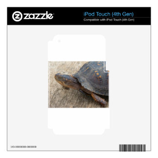 Eastern Box Turtle (Endangered Species) Decals For iPod Touch 4G