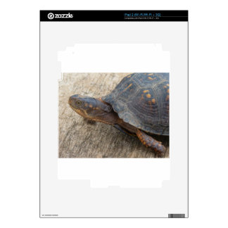 Eastern Box Turtle (Endangered Species) iPad 2 Skins