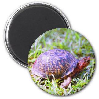 Eastern Box Turtle Louisiana Magnet