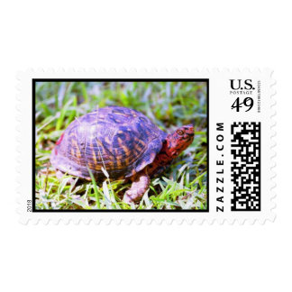 Eastern Box Turtle Louisiana Stamps