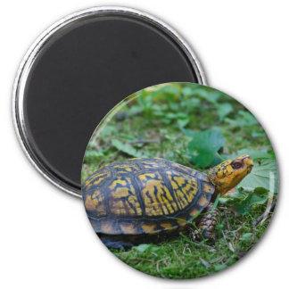 Eastern Box Turtle Magnet