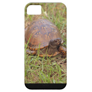 Eastern Box Turtle (North Carolina and Tennessee) iPhone SE/5/5s Case
