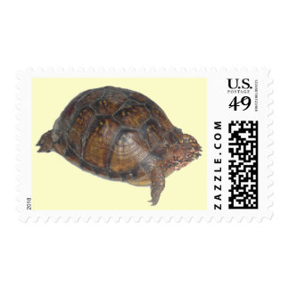 Eastern Box Turtle Postage Stamps