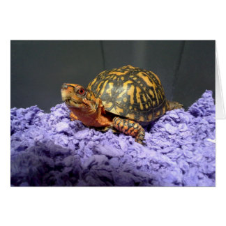 Eastern Box Turtle Red-Eyed Male Card