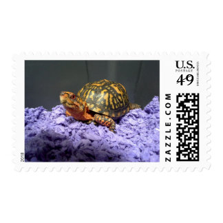 Eastern Box Turtle Red-Eyed Male Postage
