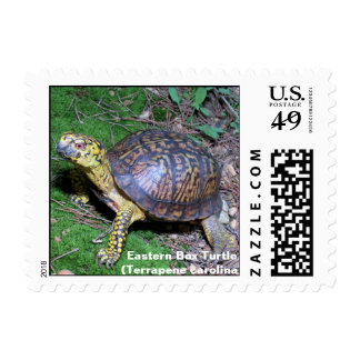 Eastern Box Turtle Stamps