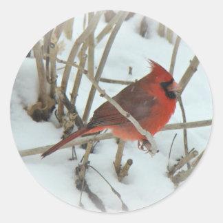 Eastern Cardinal Songbird Coordinating Items Classic Round Sticker