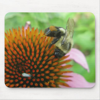 Eastern Carpenter Bee & Coneflower Series Mouse Pad