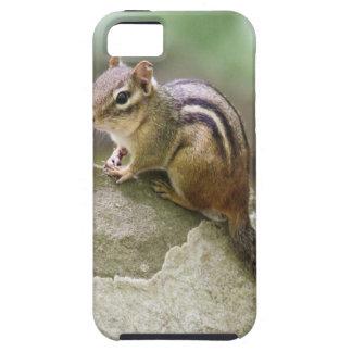 Eastern Chipmunk iPhone SE/5/5s Case
