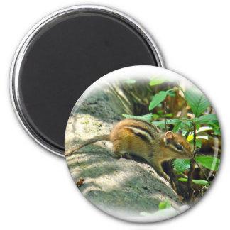 Eastern Chipmunk on Stump Magnet