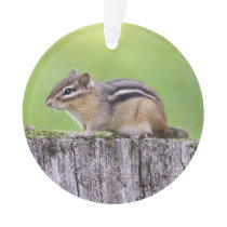 Eastern Chipmunk Ornament