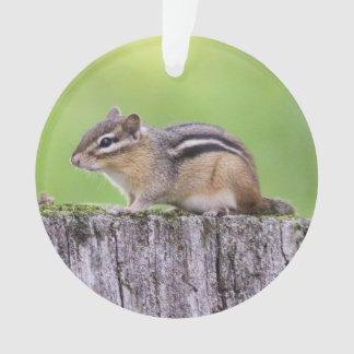 Eastern Chipmunk Ornament