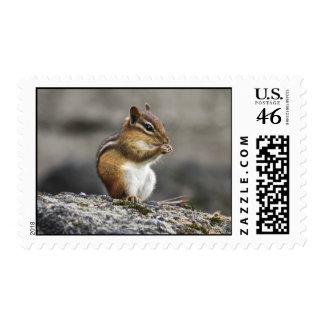 Eastern Chipmunk Postage Stamp