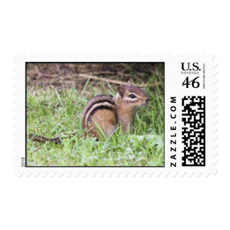 Eastern Chipmunk Stamp