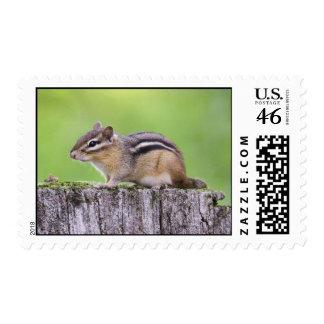 Eastern Chipmunk Postage