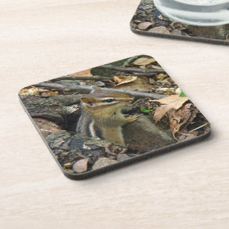 Eastern Chipmunk - Tamias striatus Beverage Coaster