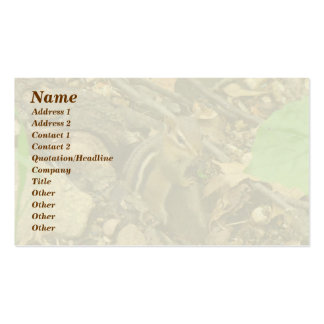 Eastern Chipmunk - Tamias striatus Double-Sided Standard Business Cards (Pack Of 100)