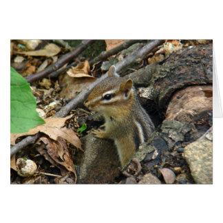 Eastern Chipmunk - Tamias striatus Card