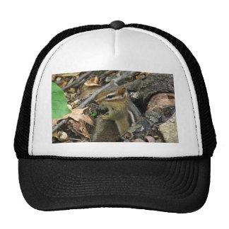 Eastern Chipmunk - Tamias striatus Trucker Hat