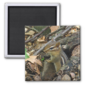 Eastern Chipmunk - Tamias striatus Magnet