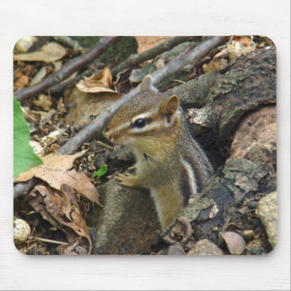 Eastern Chipmunk - Tamias striatus Mouse Pad