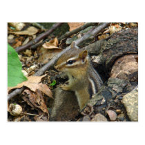 Eastern Chipmunk - Tamias striatus Postcard