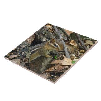 Eastern Chipmunk - Tamias striatus Tile