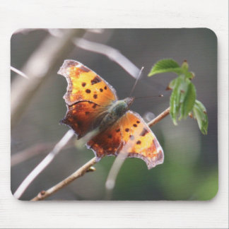 Eastern Comma Mouse Pad