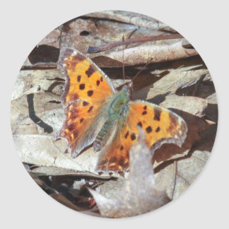 Eastern Comma Round Stickers