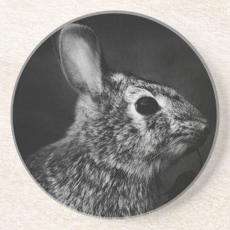 Eastern Cottontail Bunny Rabbit Coaster