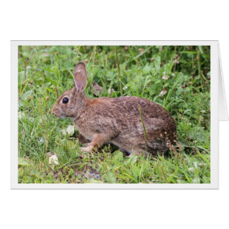 Eastern Cottontail Card