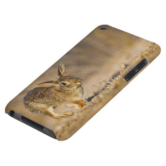 Eastern cottontail rabbit hopping barely there iPod case