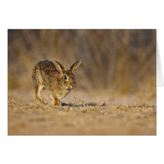 Eastern cottontail rabbit hopping card