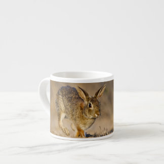 Eastern cottontail rabbit hopping espresso cup