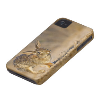 Eastern cottontail rabbit hopping iPhone 4 Case-Mate case