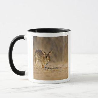 Eastern cottontail rabbit hopping mug