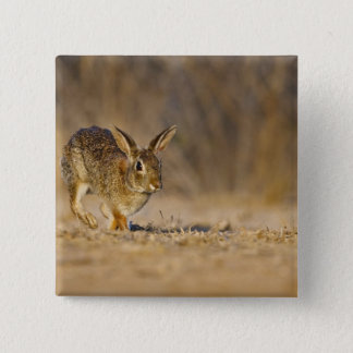 Eastern cottontail rabbit hopping pinback button