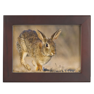 Eastern cottontail rabbit hopping memory box