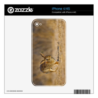 Eastern cottontail rabbit hopping skin for the iPhone 4S
