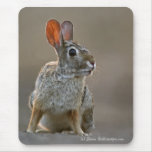 Eastern Cottontail Rabbit Mousepads