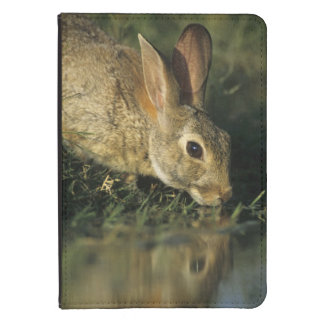 Eastern Cottontail, Sylvilagus floridanus, 2 Kindle Touch Cover