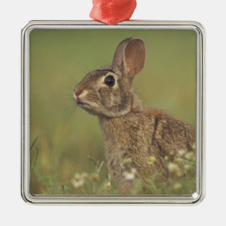 Eastern Cottontail, Sylvilagus floridanus, 3 Metal Ornament