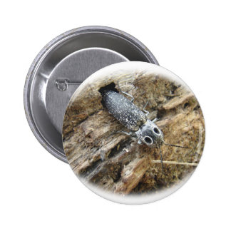 Eastern Eyed Elater Click Beetle - Alaus oculatus Buttons