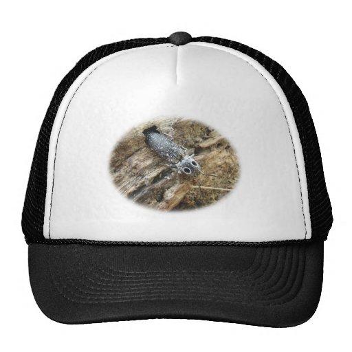 Eastern Eyed Elater Click Beetle - Alaus oculatus Mesh Hats