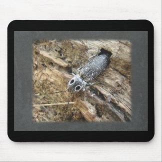 Eastern Eyed Elater Click Beetle - Alaus oculatus Mouse Pad