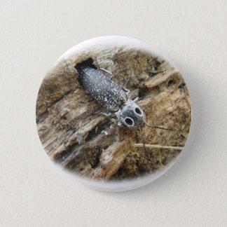 Eastern Eyed Elater Click Beetle - Alaus oculatus Pinback Button