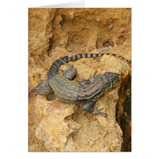 Eastern Fence Lizard Card